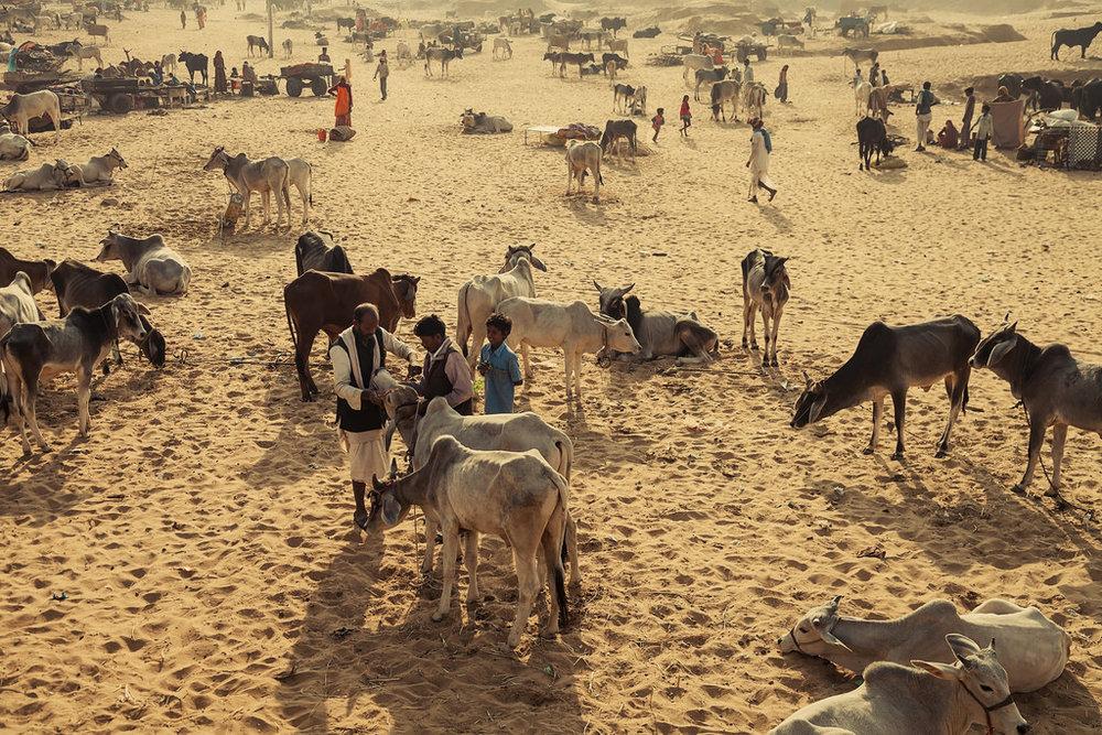 Rajasthan_13.jpg