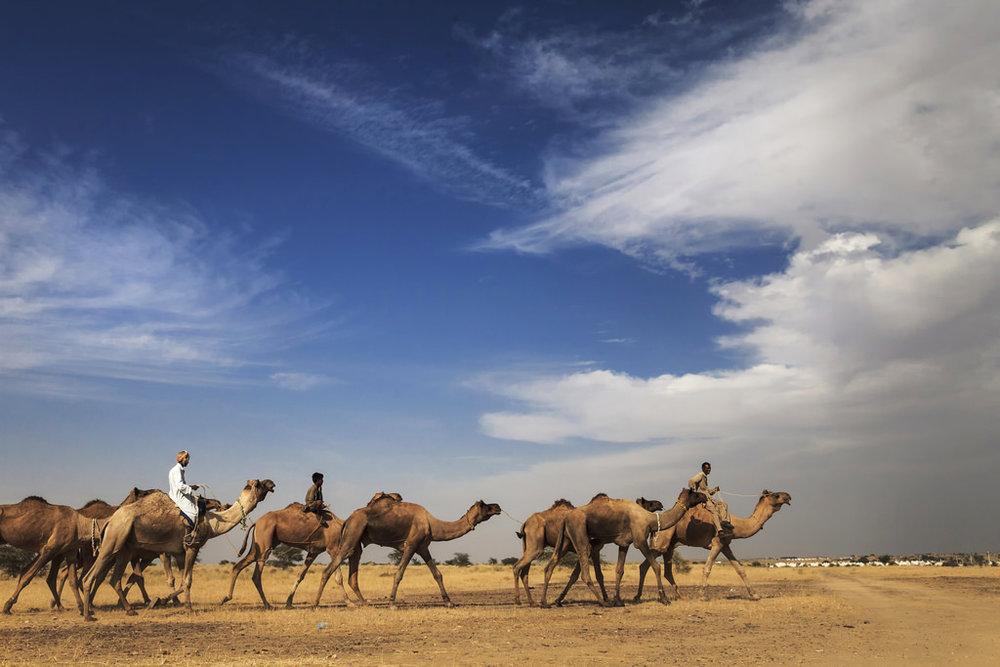Rajasthan_18.jpg