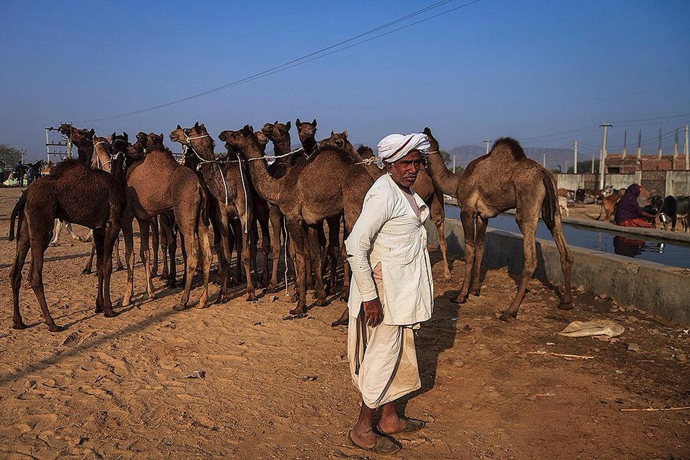 Rajasthan_29.jpg