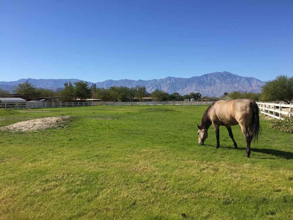 Palo_Verde_Ranch_Pasture.jpg