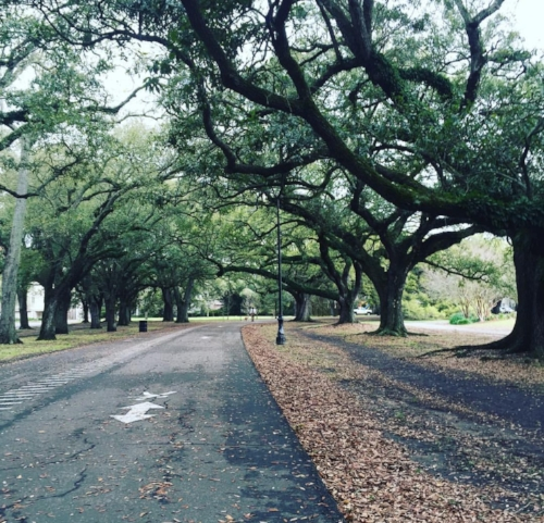Audubon Park Running Trail