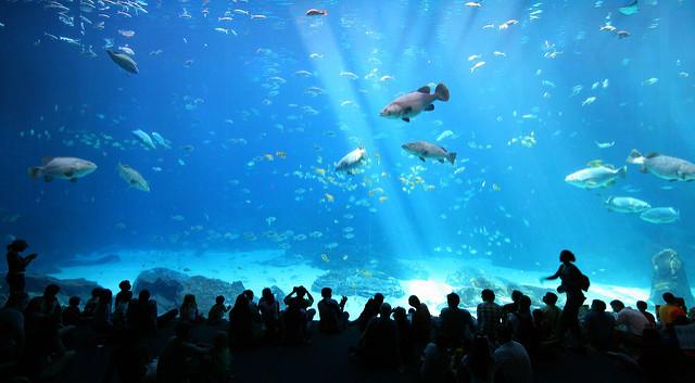 The Georgia Aquarium.  Photo  by  Girish...  via flickr.