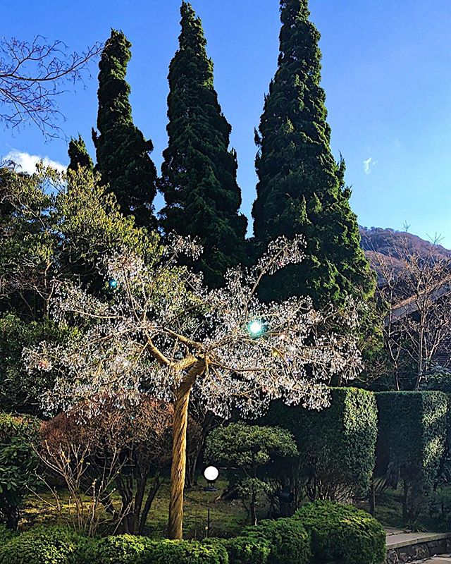 Glass Trees, Real Trees both are beautiful! The Venetian Glass Museum in the Mountain area of Hakone, Japan was an unexpected treat!