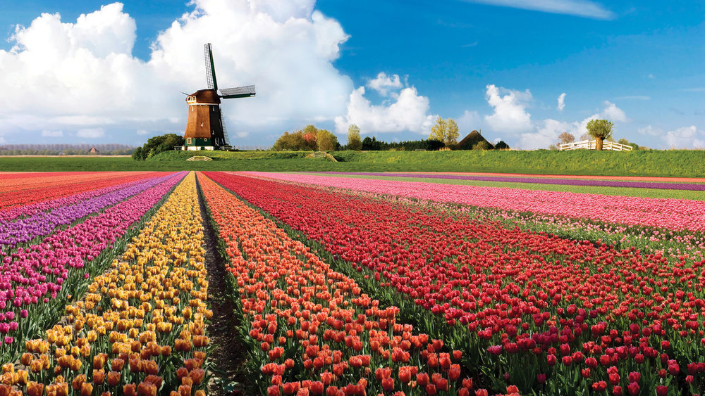 Flower fields around the Keukenhof