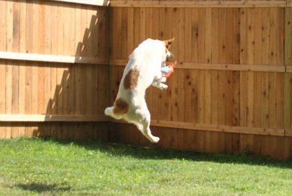 sadie jump.jpg