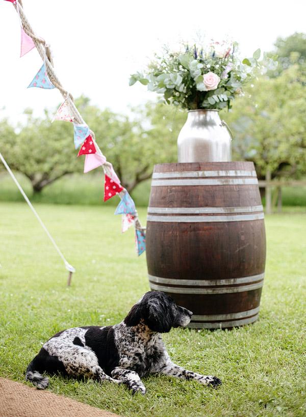 pets-at-weddings.jpg