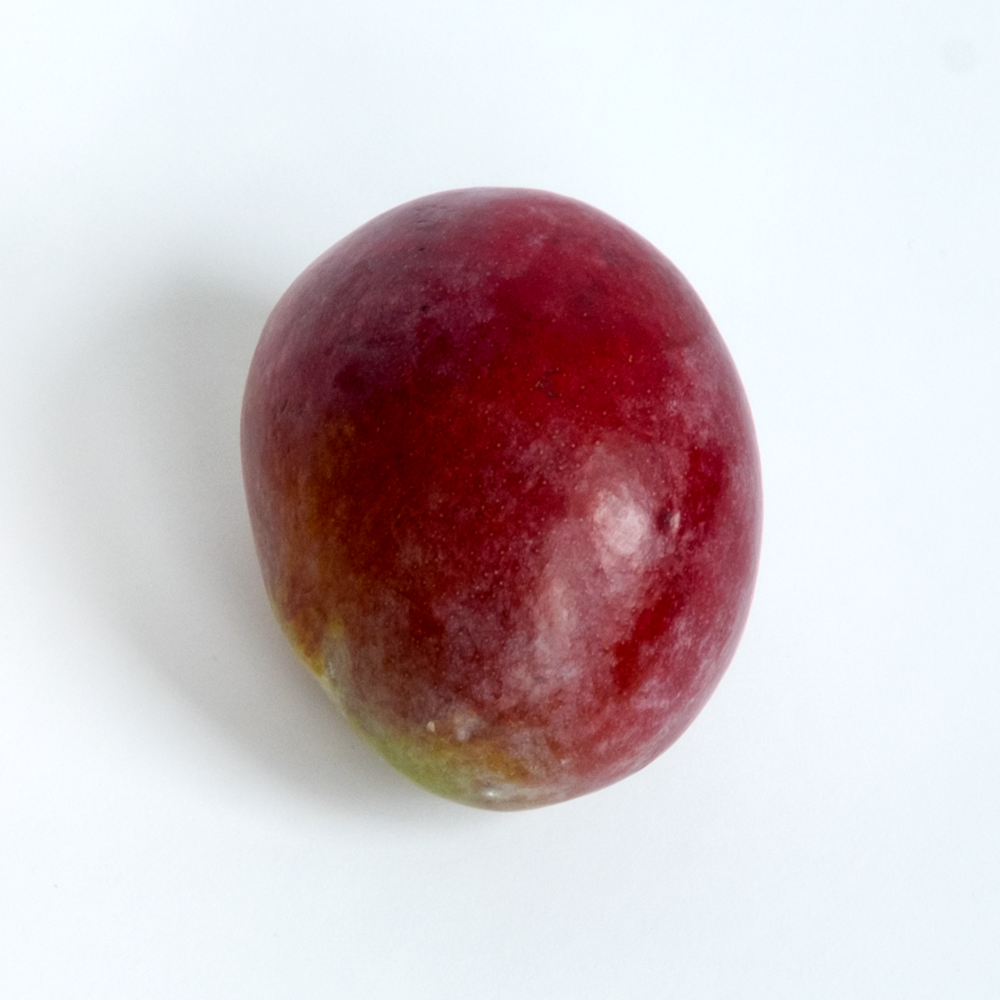 3xStudio_Objects_Darcy_Mango.png