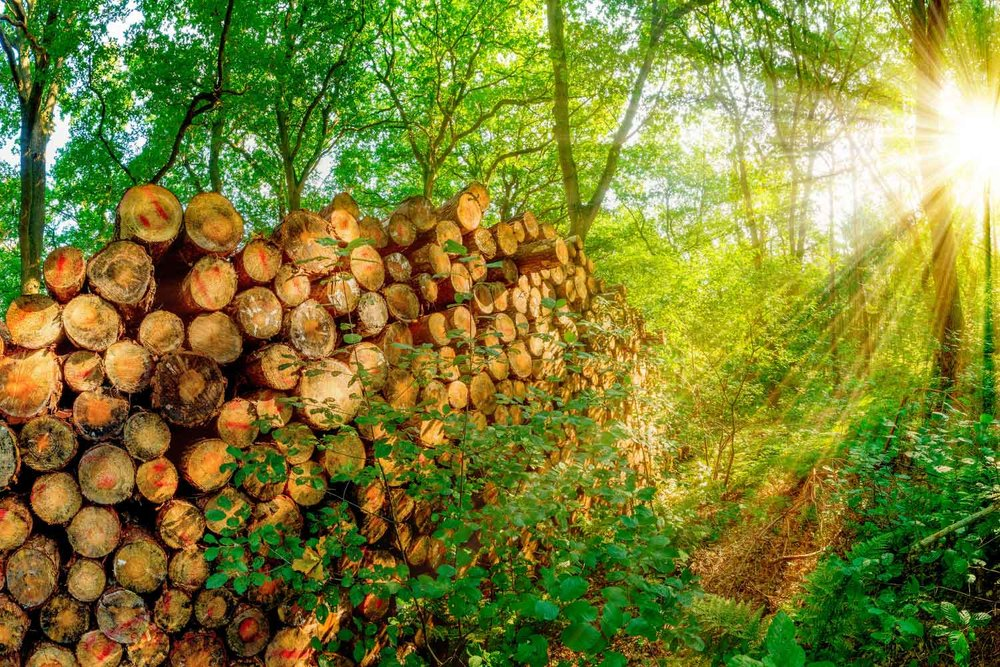Lumber Forest