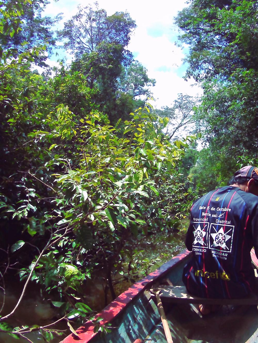 Percy, eigentlich Maler, hier in seiner Rolle als unser Dschungelführer.