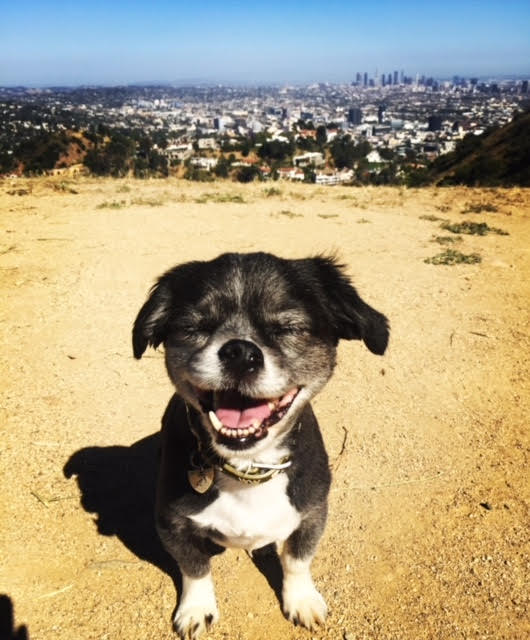 James Bond on a hike in Los Angeles