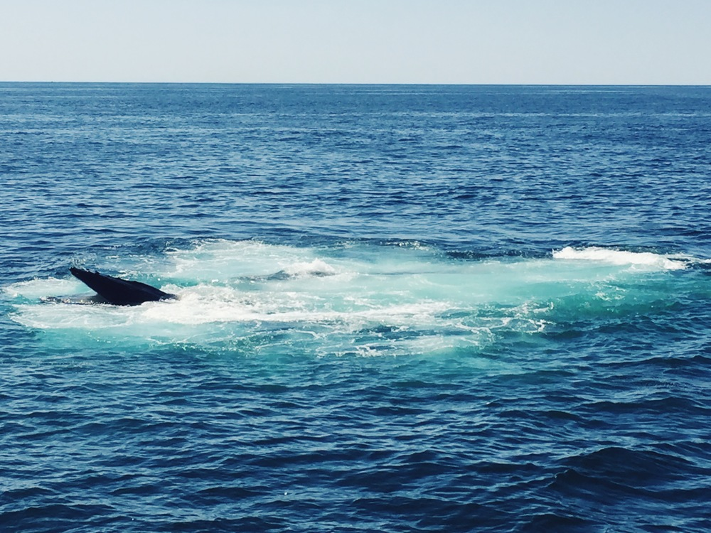 picture taken in Cape Cod- whale watching 2016