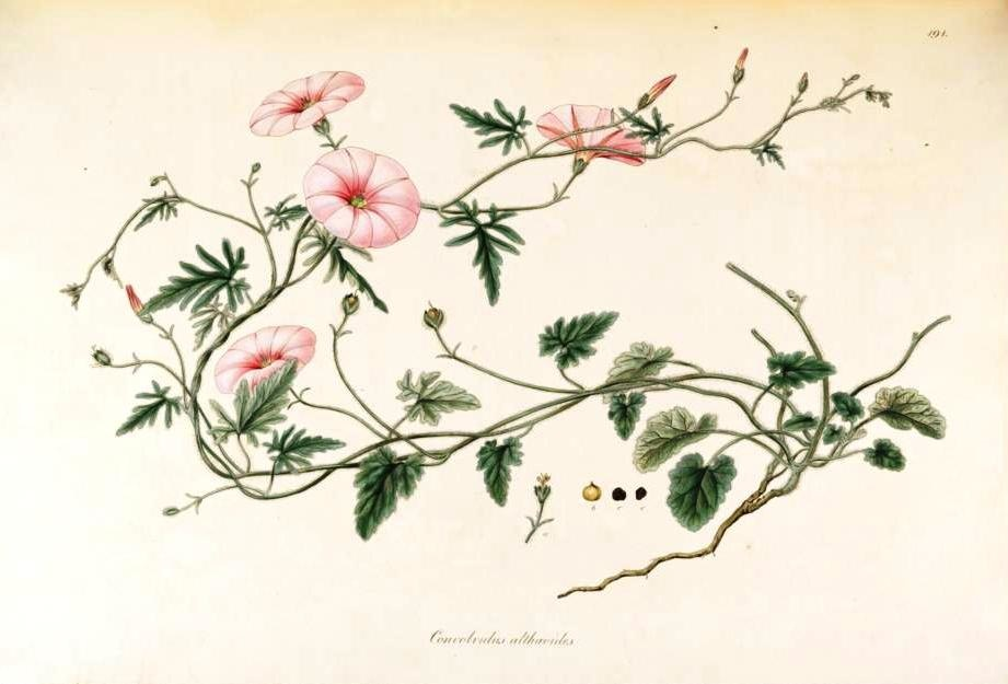 source: http://www.botanicalartandartists.com