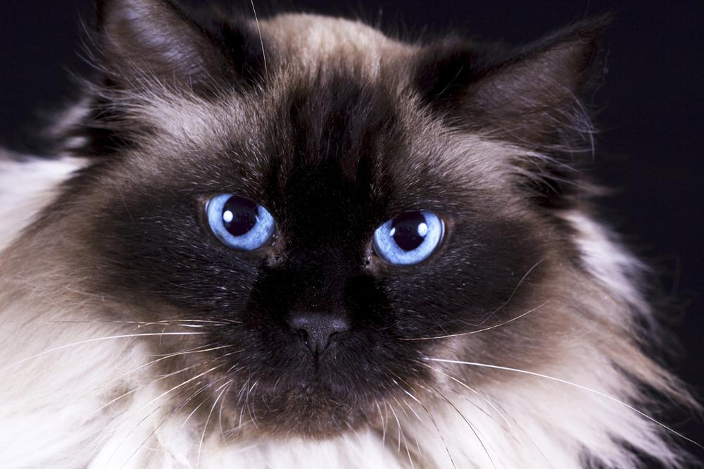 Katzen Welt