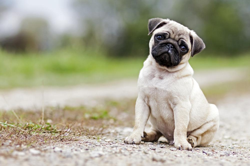 5 Perfekte Hunderassen Fur Anfanger Aus Liebe Zum Haustier