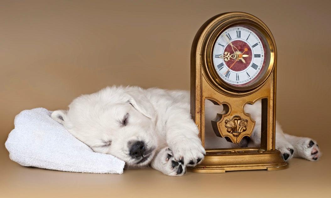 So Erleichtern Sie Ihrem Hund Die Zeitumstellung