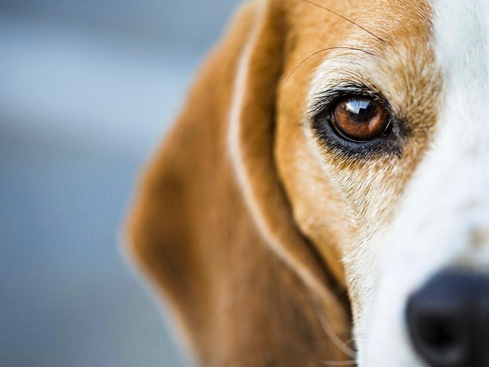 Diese 8 Dinge Sehen Hunde   Wir Jedoch Nicht