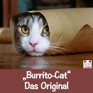 --Meme-katze-burrito.jpg