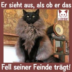 -Meme-katze-fell.jpg