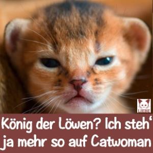 -Meme-katze-lionking.jpg
