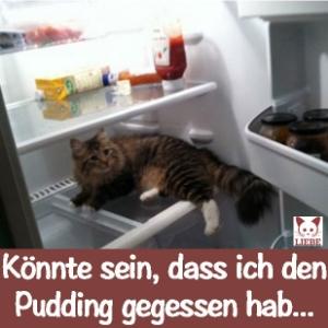 -Meme-katze-pudding.jpg