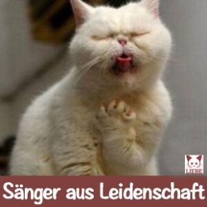 --Meme-katze-saenger.jpg