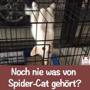 --Meme-katze-spidercat.jpg