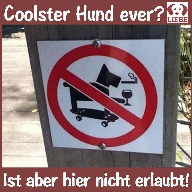-Meme-hund-coolerhund.jpg