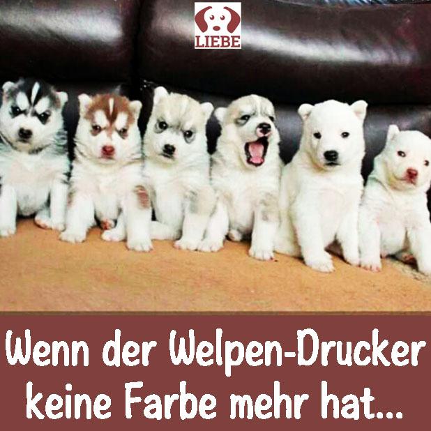-Meme-hund-drucker-farbe.jpg