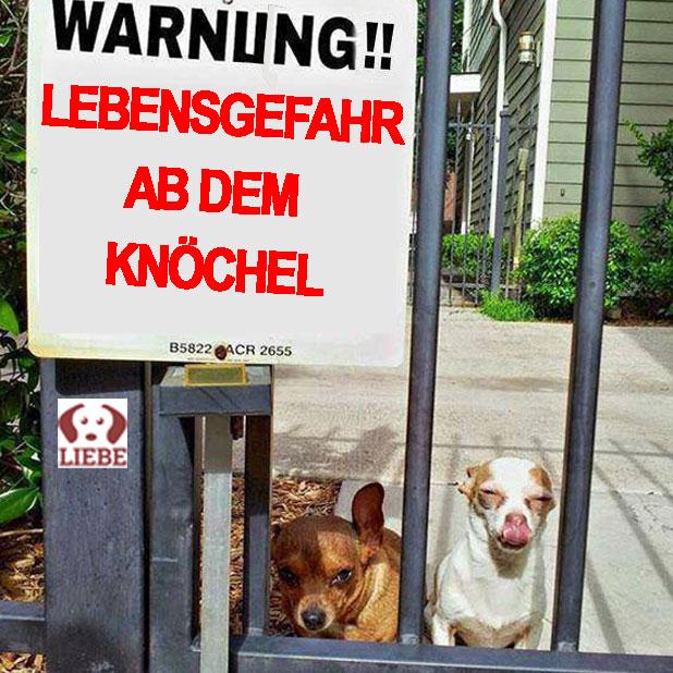 --Meme-hunde-lebensgefahr.jpg