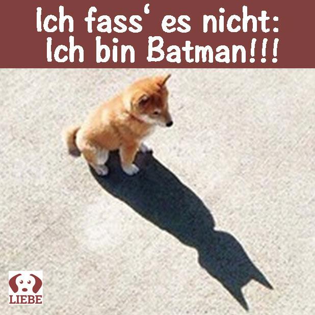 --Meme-hund-batman.jpg