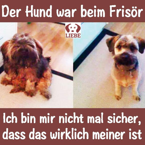 -Meme-hund-frisoer.jpg