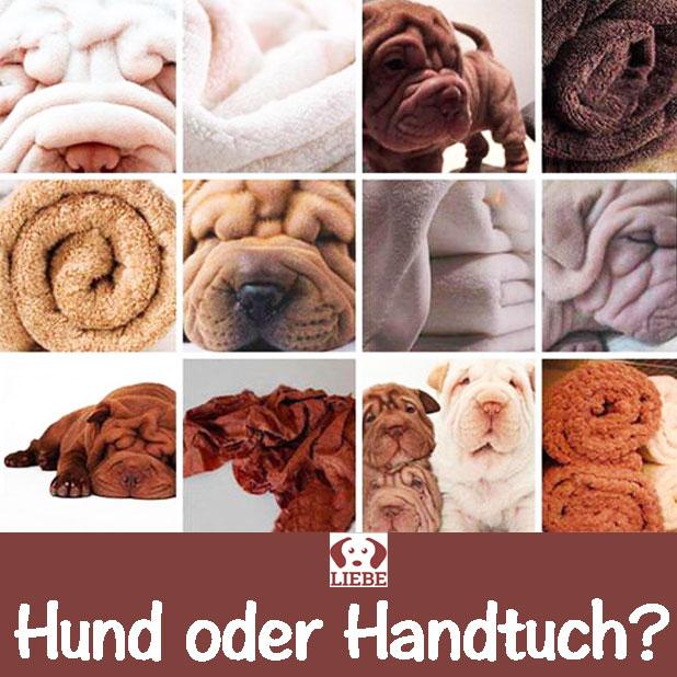 -Meme-hund-handtuch.jpg