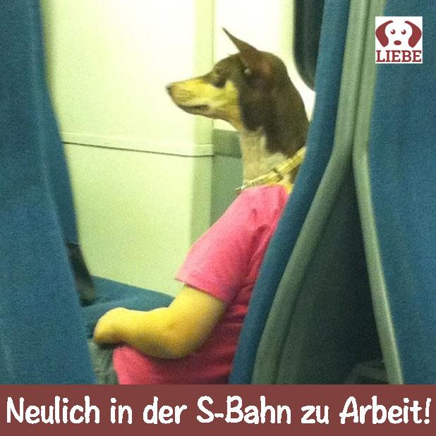 --Meme-hund-sbahn.jpg