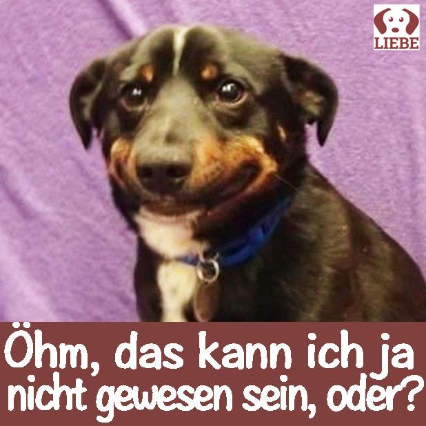-Meme-hund-scham.jpg