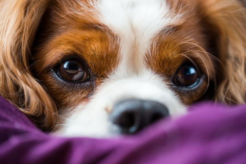 8 tipps gegen mundgeruch beim hund aus liebe zum haustier. Black Bedroom Furniture Sets. Home Design Ideas