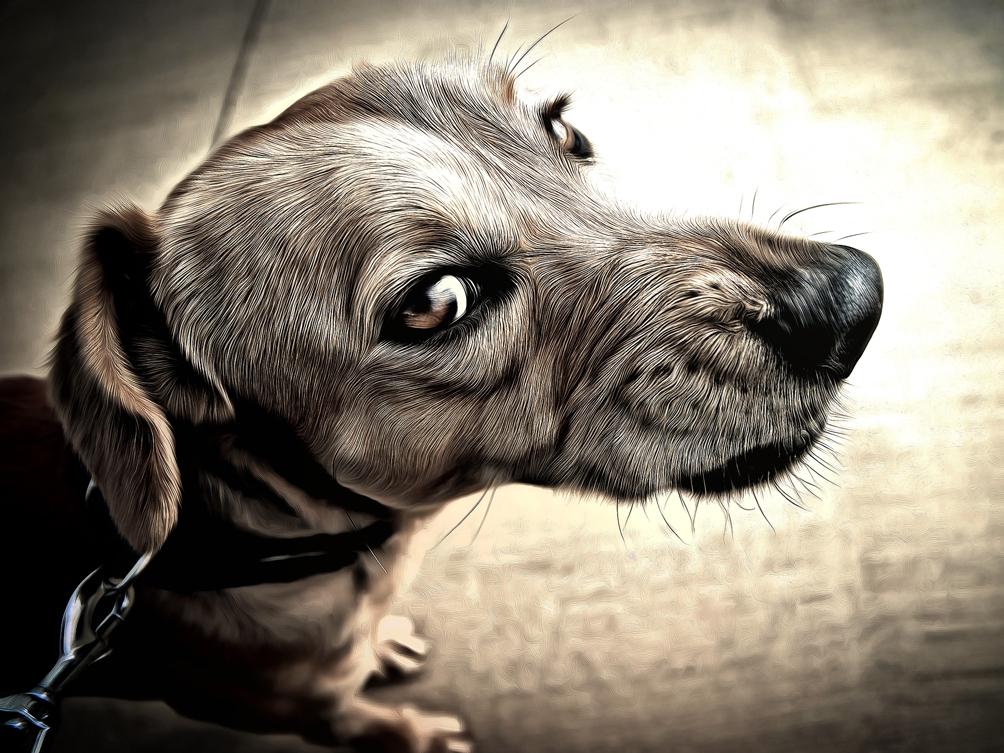 Darum Mögen Manche Hunde Keine Anderen Hunde