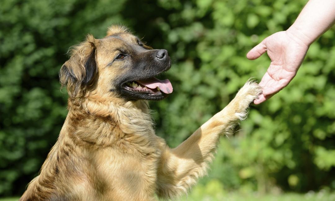 Darum Geben Hunde Wirklich Pfötchen