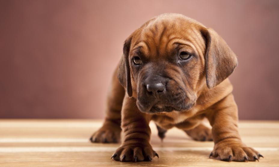 Schon Diesen Fußboden Sollten Hundebesitzer Haben