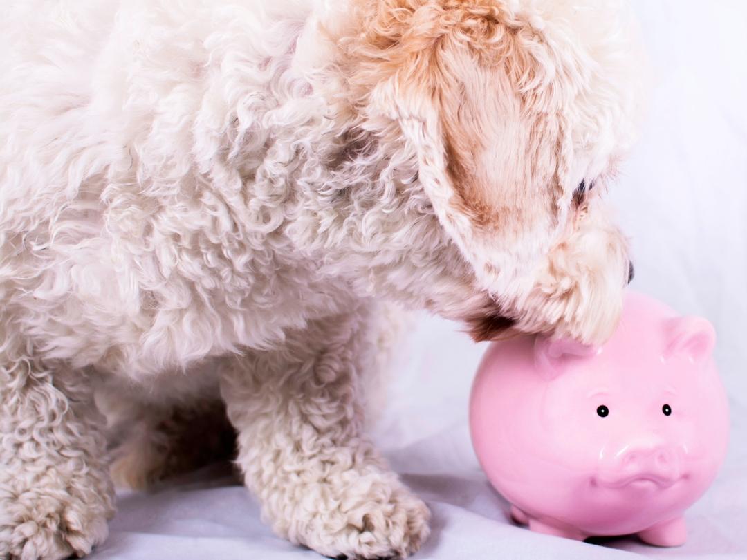 Das Kostet Ein Hund Wirklich