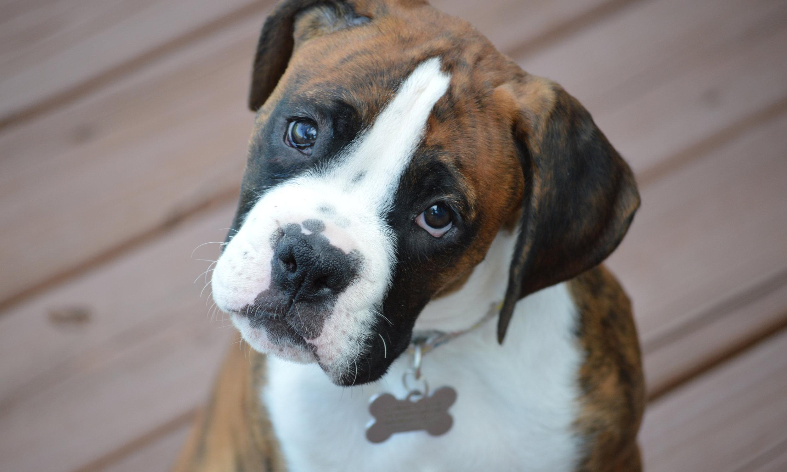 Wunderbar Was Bedeutet Die Körpersprache Ihres Hundes?