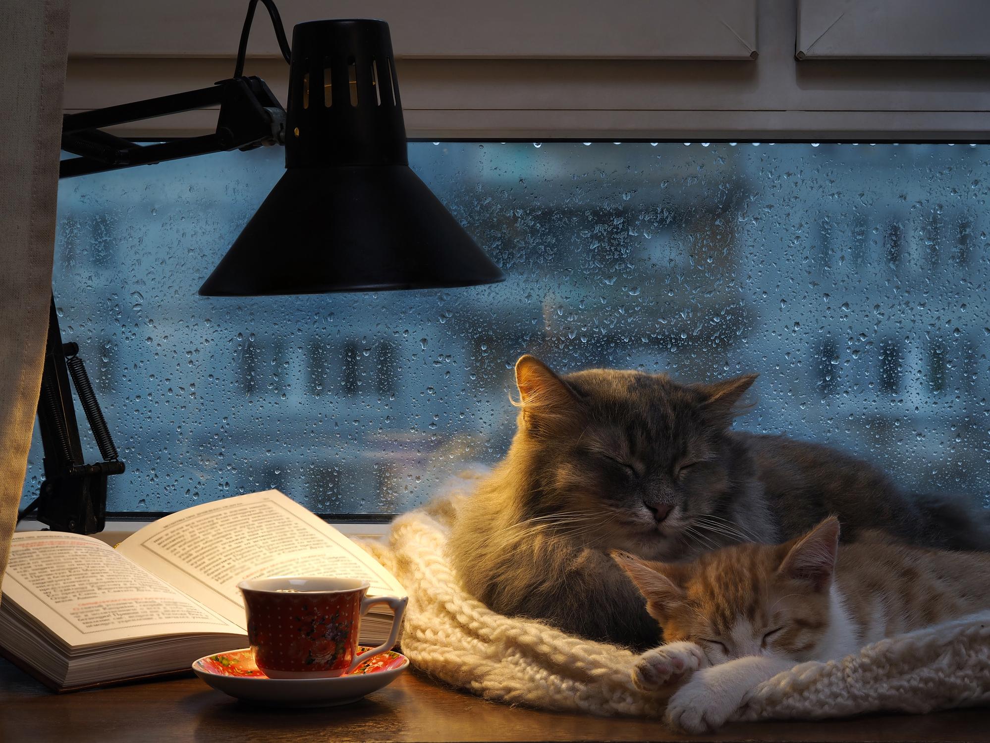 8 tipps das sollten sie ber alte katzen wissen aus liebe zum haustier. Black Bedroom Furniture Sets. Home Design Ideas