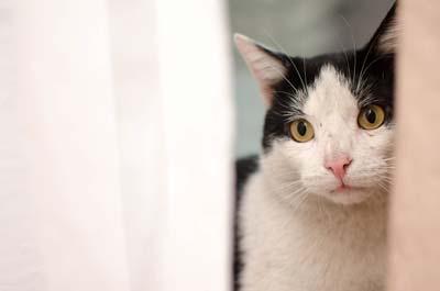 Mit unseren Tipps hat die Katze an Silvester keine Angst.