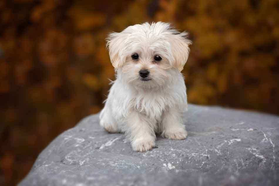 Die beliebtesten Hundenamen 2018