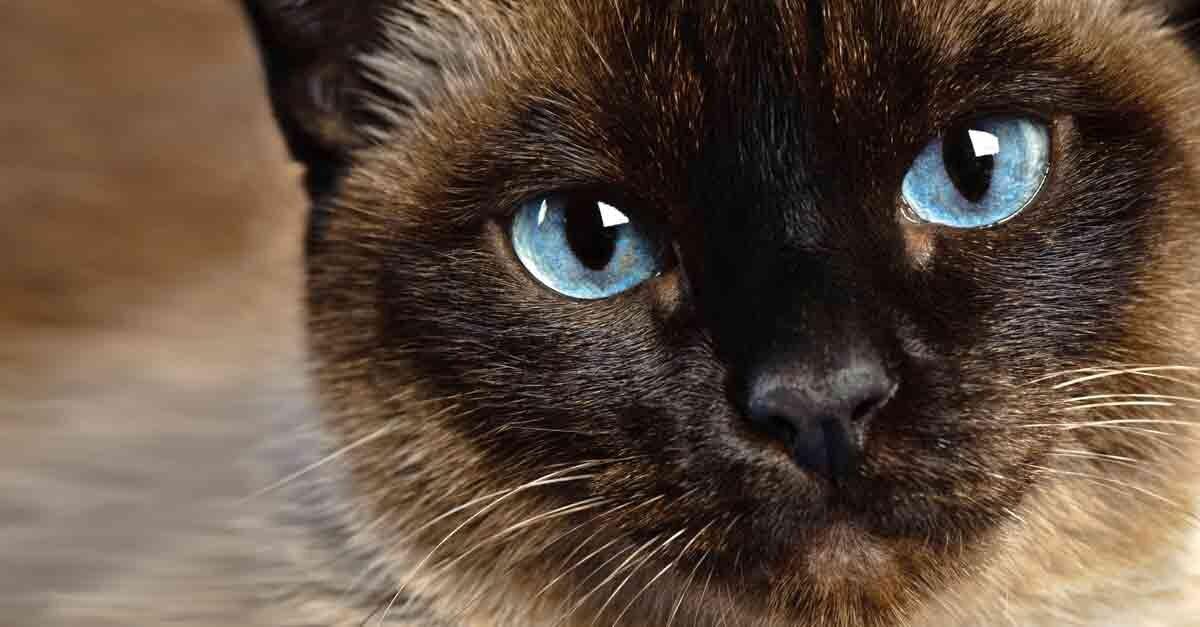 Diese Katzen Haben Die Schönsten Augen Aus Liebe Zum Haustier