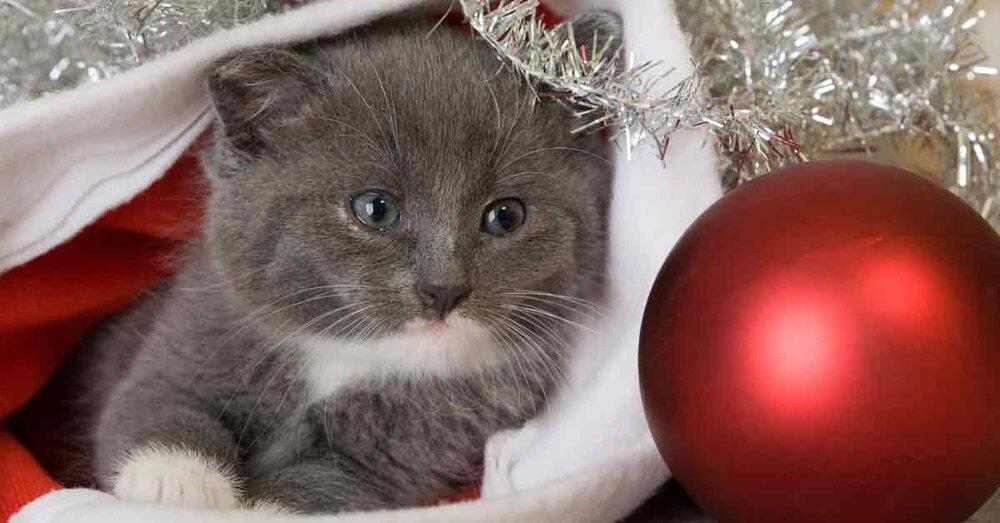 10 Weihnachtsgeschenke für die Katze — Aus Liebe zum Haustier