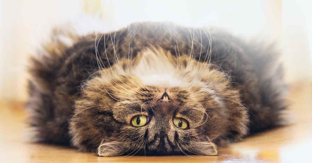 die nackte wahrheit ber nacktkatzen aus liebe zum haustier. Black Bedroom Furniture Sets. Home Design Ideas
