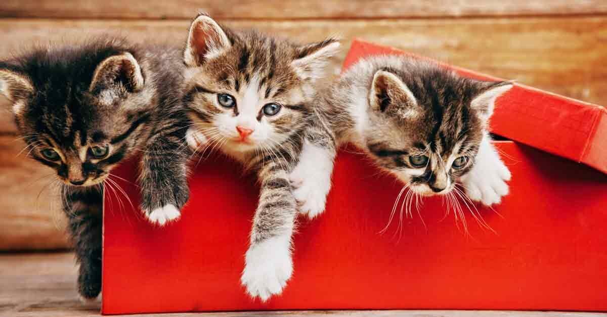 so erleichtern sie ihrer katze den fellwechsel aus liebe zum haustier. Black Bedroom Furniture Sets. Home Design Ideas