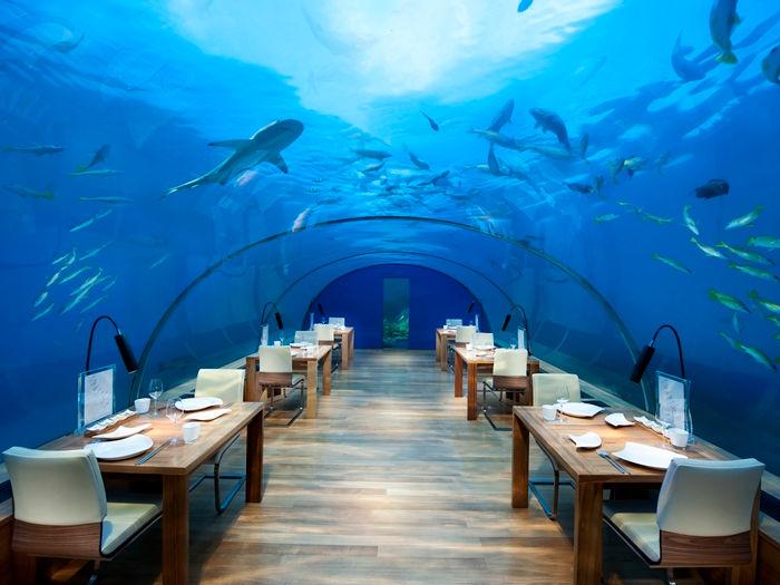 Undervannsrestauranten Ithaa er en attraksjon i seg selv. Helt unikt å være under vann når de mater fiskene.