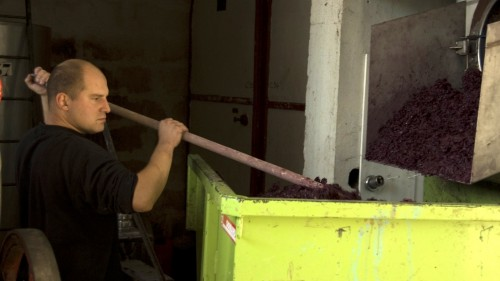 Baptiste Grangeon processing Grenache at Domaine de Cristia
