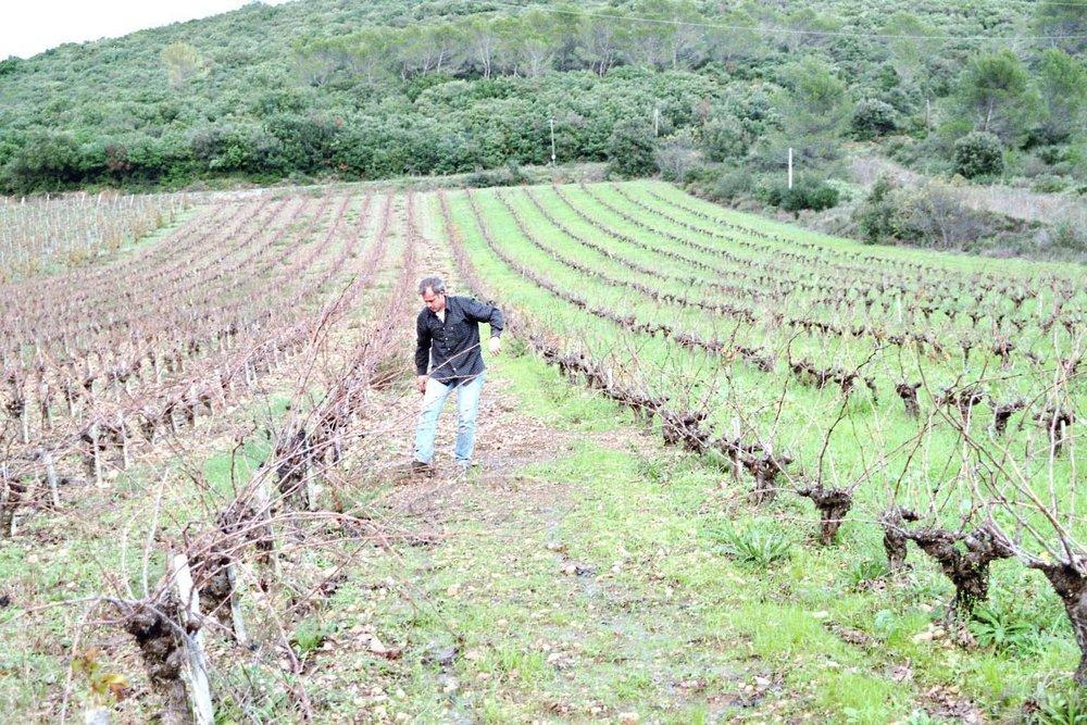Didier in the vineyard